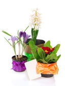 花盆的鲜花,装饰由磁带卡上白色隔离 — 图库照片