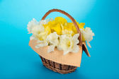 Gentle spring flowers in a basket with a napkin, on a blue background — Stock Photo