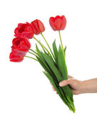 The female hand holds a bouquet of the red tulips, isolated on white — Photo