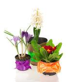 Macetas con flores diversas, decoradas por una cinta — Foto de Stock