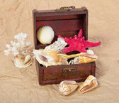 Sea shells, cockleshells, starfishes in a chest on old paper — Stock Photo