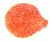 Red cockleshells close up isolated on white — Stock Photo