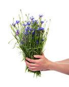 Mains de femmes détiennent une brassée de fleurs des bleuets — Photo