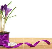 Pentola con crochi, decorato da un nastro sul panno bambù, isolato su bianco — Foto Stock
