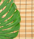 Green leaf close up on a bamboo napkin — Stock Photo