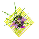 Pot with crocuses on a napkin, isolated on white — Stock Photo