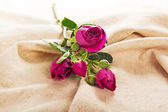Charming branch of a rose on a canvas — Stock Photo