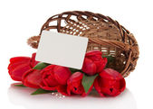 The red tulips which have dropped out of a basket, and empty card for the letter, isolated on white — Stock Photo