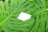 绿色的热带树叶与空白卡。背景 — 图库照片