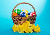 Eggs in a basket and narcissuses on a blue background — Stock Photo