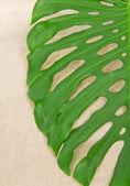 Big green leaf close up on fabric — Stock Photo