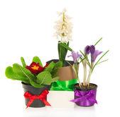 由磁带装饰花盆的鲜花,一张卡,孤立的鲜花,whitepots 上装饰的磁带卡 — 图库照片