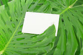 White card against green tropical leaves — Stock Photo