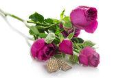 Tak van rozen met druppels water en de vrouwelijke oor ringen geïsoleerd op wit — Stockfoto