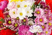 Bright flowers. Background — Stock Photo