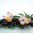 Flower of an alstroemeria and stones in water drops on a howea leaf, on a gray background — Stock Photo