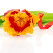 Stock Photo: Bright tulip decorated by tape isolated on white