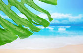 Green leaf in drops against the sea — Stock Photo