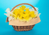 Wattled basket with narcissuses and a napkin on a blue background — Stock Photo