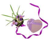Krokussen en een doos van de gift in de vorm van het hart, geïsoleerd op wit — Stockfoto