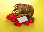 The red tulips which have dropped out of a basket, and white empty card for the letter, on a yellow background — Stock Photo