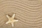 Heerlijke zeesterren op zand — Stockfoto