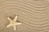 Schöne seesterne auf sand — Stockfoto