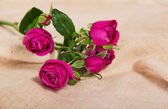 Fine pink roses on a canvas — Stock Photo