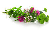Branch of green chrysanthemums and the colored carnations — Stock Photo