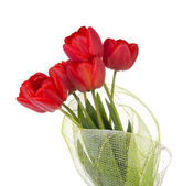 The bouquet of red tulips is decorated by a gossamer, isolated on white — Photo