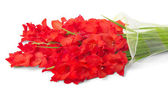 Bouquet of red gladiolus isolated on white — Stock Photo