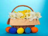 Flowers with a napkin in a basket and bright Easter eggs, on a blue background — Stock Photo