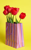 Red tulips in a striped package, on a yellow background — Stock Photo