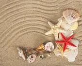 Beautiful cockleshells and starfishes on sand — Stock Photo