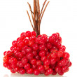 Linking of berries a guelder-rose — Stock Photo