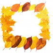 Autumn maple leaves falling frame — Stock Photo
