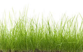 Green uncut grass — Stock Photo