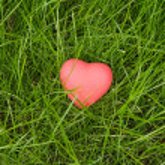 Little red heart lying on green grass — Stock Photo