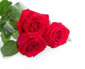 Beautiful three red rose — Stock Photo