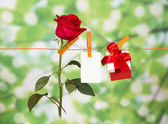 Red roses, present and name card on clothesline — Stock Photo
