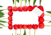 Red tulips frame — Stock Photo