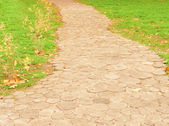 Path in park — Foto Stock