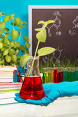 Chemical flask with experimental liquid — Stock Photo