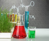 Flasks with colorful liquids — Stock Photo