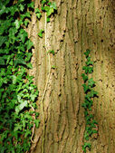 Leafed Tree Bark — Stock Photo