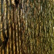 Tree Bark — Stock Photo #37422899