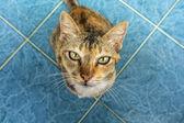 Staring Cat — Stock Photo
