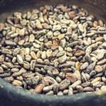 Theobroma cacao seeds — Stock Photo #48096843