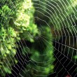 Cobweb in the nature with daylight — Zdjęcie stockowe