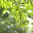 Bamboo leaves in the forest — Foto Stock